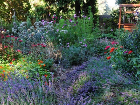 Lavenders (clockwise from lower left), nasturtiums, beebalm (red), alliums (ball-shaped flowers), cleome, clematis (climber in upper right) and zinnias.