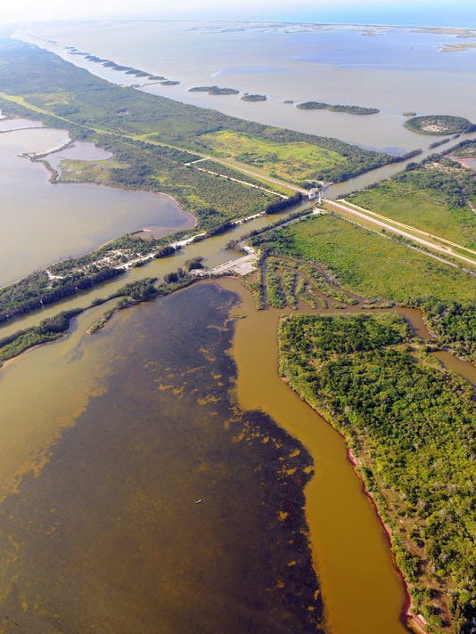 Brown Tide Keeps Clumping Up The Indian River Lagoon