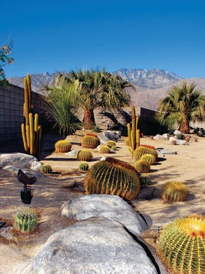 Groupings of barrel cactus carry the eye back to where a dark wall, softened by palms, seems unobtrusive. Light colored gravel ties  it all together.