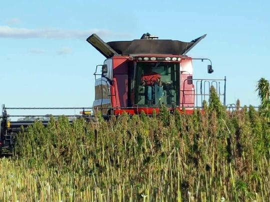 Farmers who are interested in learning more about industrial hemp production can have their questions answered at Innovation Square, located in the heart of Tent City at Wisconsin Farm Technology Days.
