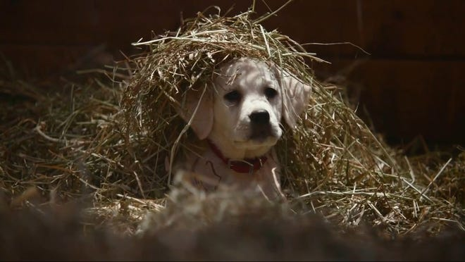 """A still from Budweiser's """"Lost Dog"""" spot, which aired during Super Bowl XLIX on Feb. 1, 2015."""