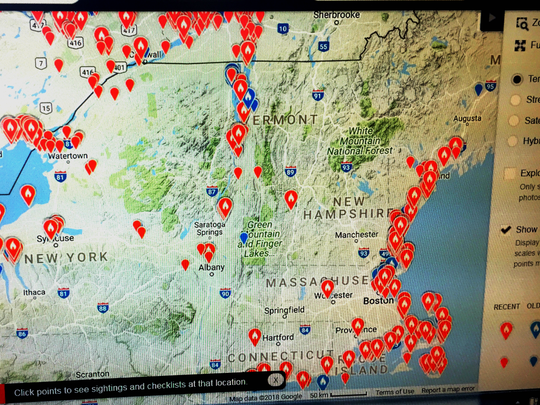 Snowy owl sightings this winter are seen as orange on this eBird.com map, photographed March 8, 2018.