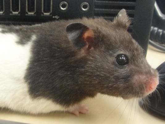 Pet of the week: Oreo