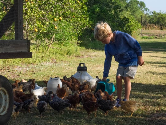 Rawlins Barkwell feeds the chickens.
