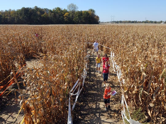Groups worked to navigate their way through the corn maze. High temperatures didn't discourage those that wanted to head out and enjoy the seasonal fun of the corn maze at the Stuckey Farm near Sheridan Saturday, October 9, 2010. / Doug McSchooler / for The Star
