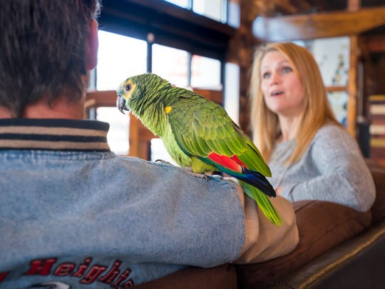 Dino the parrot hangs out on Jimmie Toms' shoulder as Kierstyn Hussin chats with him at Mido's Coffee shop in Pensacola on March 15.