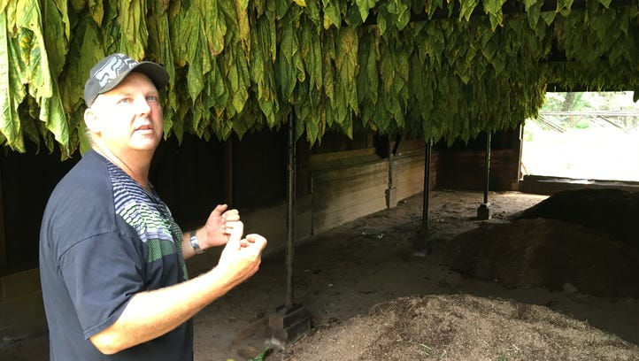 Mid-state dark-fired tobacco farmers enter curing season