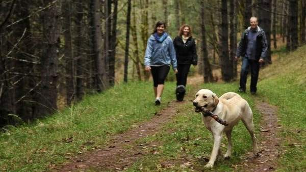 Hikers take their dog for a walk at Beazell Memorial Forest Park outside of Philomath Wednesday, Jan. 4, 2012. With more than 500 acres, the park is the largest in Benton County. It features multiple trails and a forest education center on site.