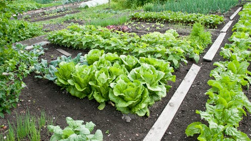 Eligible projects include urban agricultural projects, which may include introducing a new crop or product to an area, expanding the use of an agricultural product, or adding value to agricultural products. Projects that demonstrate an economic benefit and potential for sustainable revenue generation and job creation will be given priority.