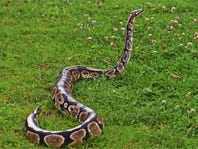 Fake snake post causes real trouble for Burlington County man