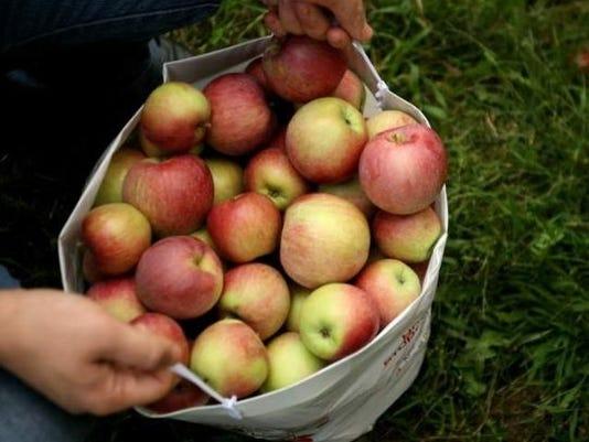 635597822364521791-apple-picking