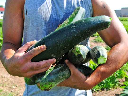 An inmate holds an armload of zucchini that was harvested from the maximum-security prison's vegetable garden. The produce is used to cut food service costs provides some inmates with work.