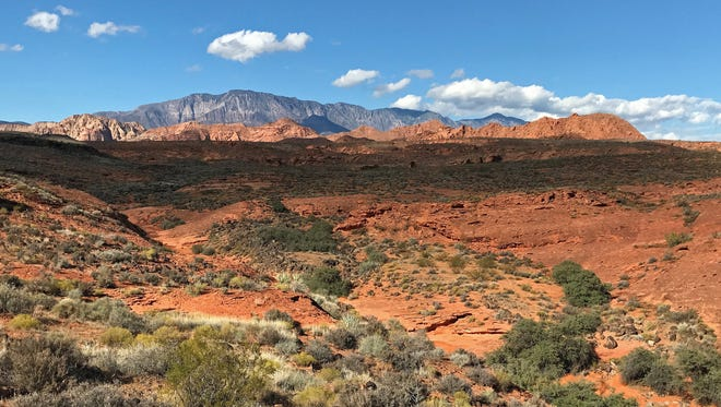 The Prospector Trail provides a panoramic view of Pine Valley Mountains, the Cottonwood Canyon Wilderness Area and Grapevine Wash in the Red Cliffs Desert Reserve.