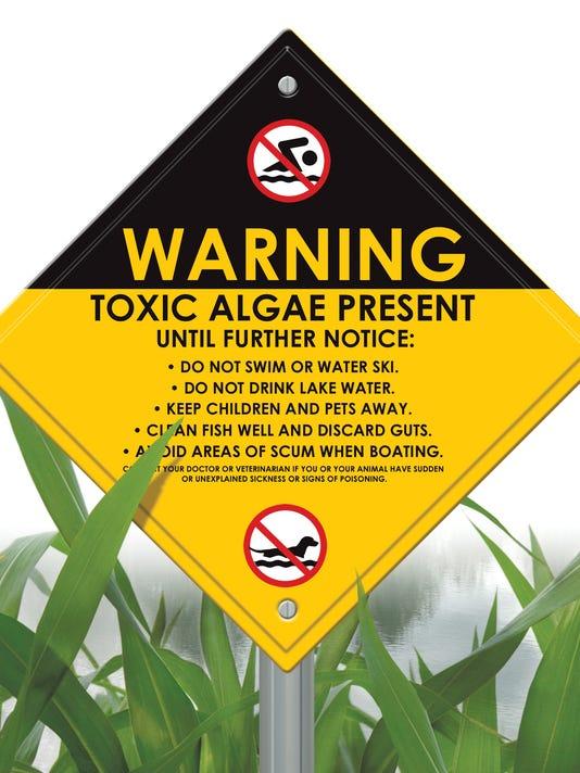 635757575884247009-algae