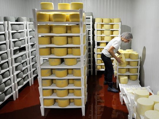 Alise Sjostrom places wheels of cheddar cheese to age