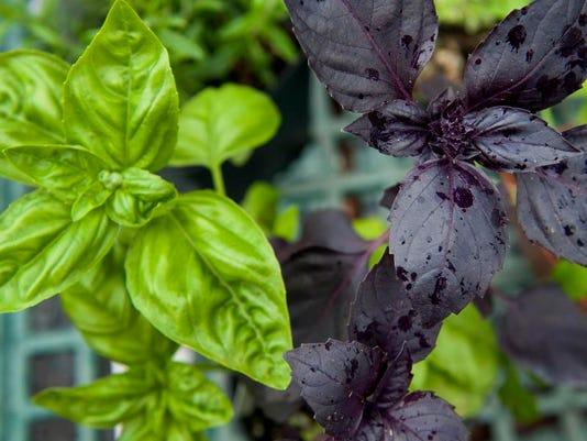 CHL 0527 Herbs on the porch02.jpg