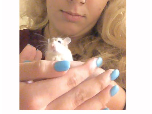 Spirit Airlines hamster flap: Student has a new rodent