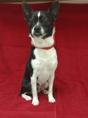 Jason is a 2-year-old, 12-pound, male terrier mix. Jason gets along well with other dogs and walks nicely on his leash. The $200 adoption fee helps cover spay/neuter, vaccinations, microchip, vetting, food and care. Call Pets Without Partners at 243-6911. Go to www.petswithoutpartners.org.