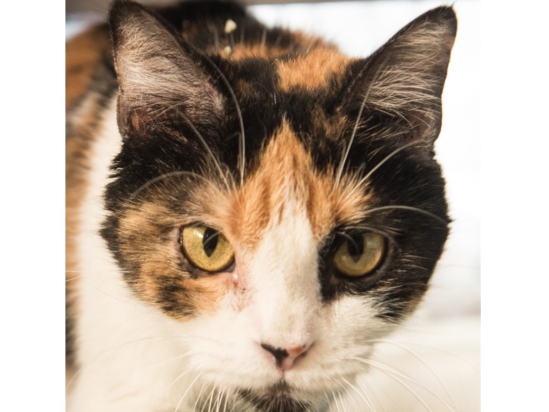 The Des Moines Register and the Animal Rescue League of Iowa are excited to introduce you to Patches!