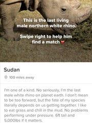 Sudan's Tinder profile