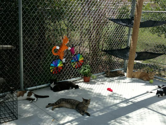 The catio is a popular hangout for long-term felines.