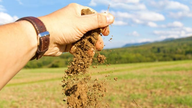 A simple soil test can tell you which nutrients your lawn lacks.