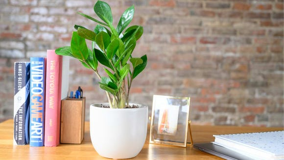 Plants make great gifts for people who love to entertain.