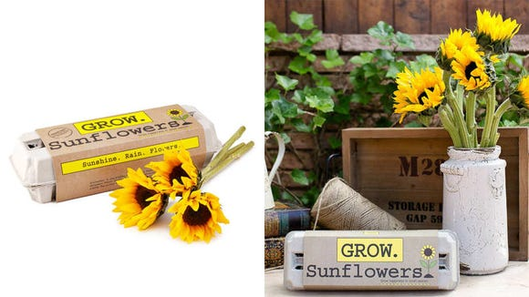 Grow a cheery patch of sunflowers.
