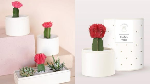 Why get roses when you can send a cactus?