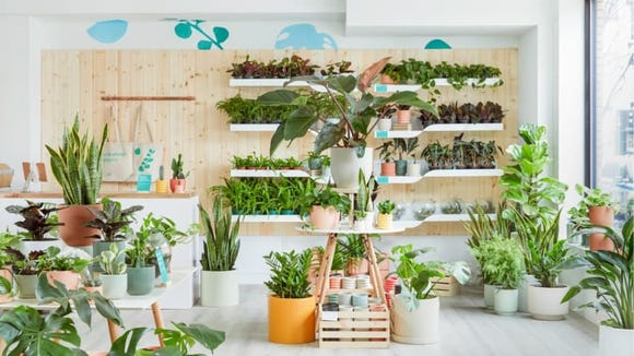 Turn your home into a plant-packed paradise.