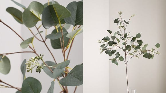 Who doesn't love the look of eucalyptus leaves?