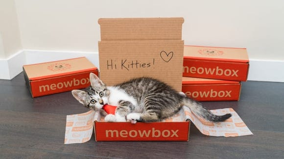 Let's be honest: Your cat would probably be content just receiving an empty box.