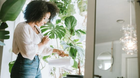 Cultivate your green thumb at home.