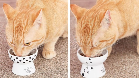 My young cats love these bowls, but they're even better for achy senior kitties