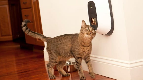 If you've ever wanted to Facetime your pets, now's your chance!