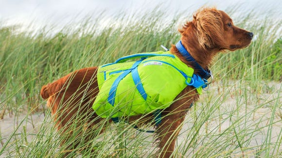This harness has two packs so your dog can carry supplies.