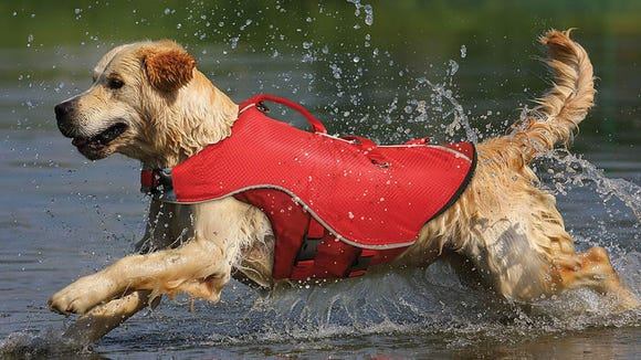 Even dogs that can swim should wear a life jacket.