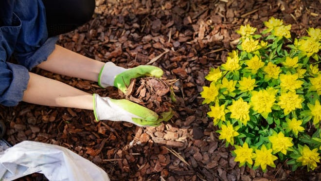 Use mulch to cover up any bare soil spots to keep weeds at bay.