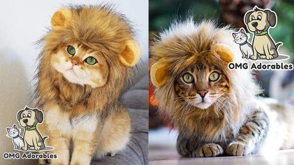 Watch your cat roar.
