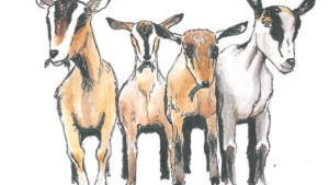 Goats and other livestock can be rented for lawn management.