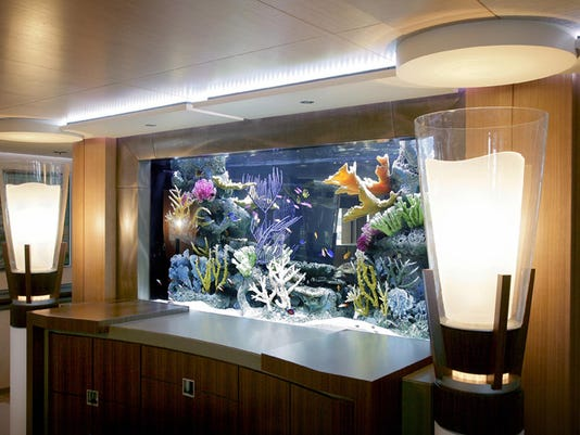 Home Touch Fish For Compliments With Aquariums