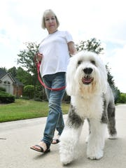 Pamela Sofferin and her dog Winston take part in the Paw Watch program in Farmington Hills on July 19, 2018.