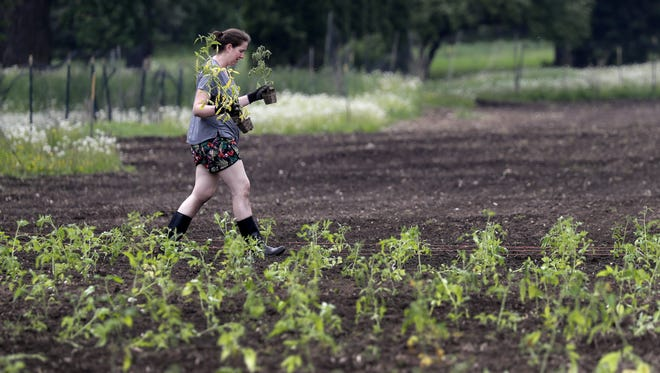 Volunteer Stacy Littlepage plants tomatoes earlier this year at Riverview Gardens in Appleton.