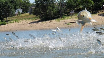 Stabenow vows to fight White House over delayed Asian carp report
