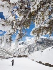 Rime ice frames a skier ascending the Toiyabe Range