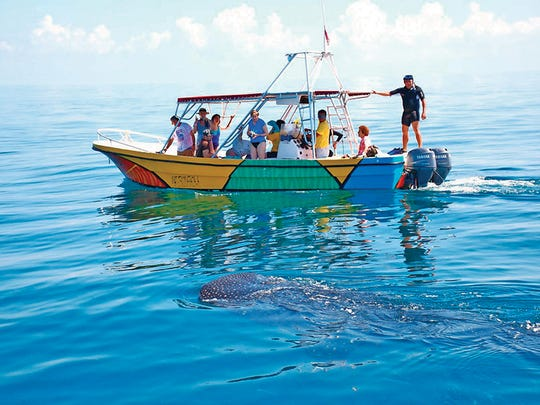 VIP Holbox Experience, a tourism agency, taking tourists
