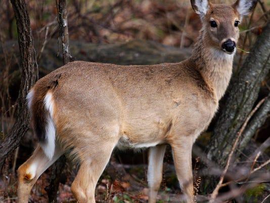 CWD deer.jpg