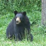 Answer Man: My neighbor won't stop feeding the bears!