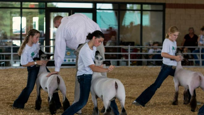 The Missouri State Fair Youth Livestock Show.