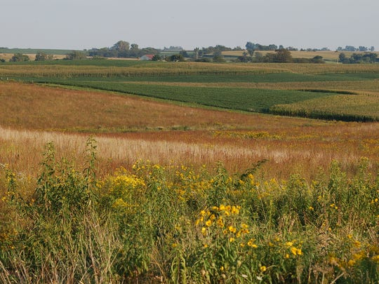 Researchers are looking at how prairie strips can be